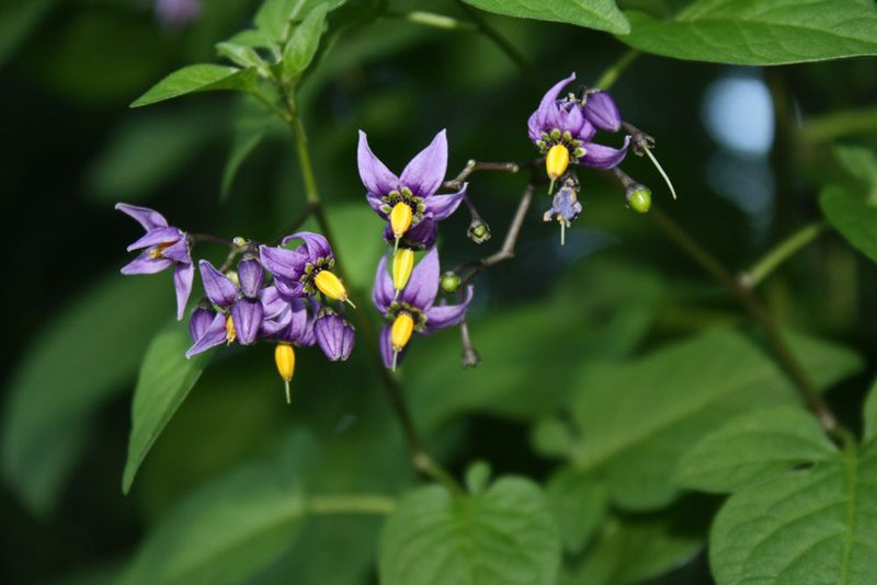 Purple-flowers-for-web