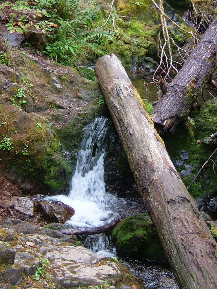 Quinault-waterfall-for-web