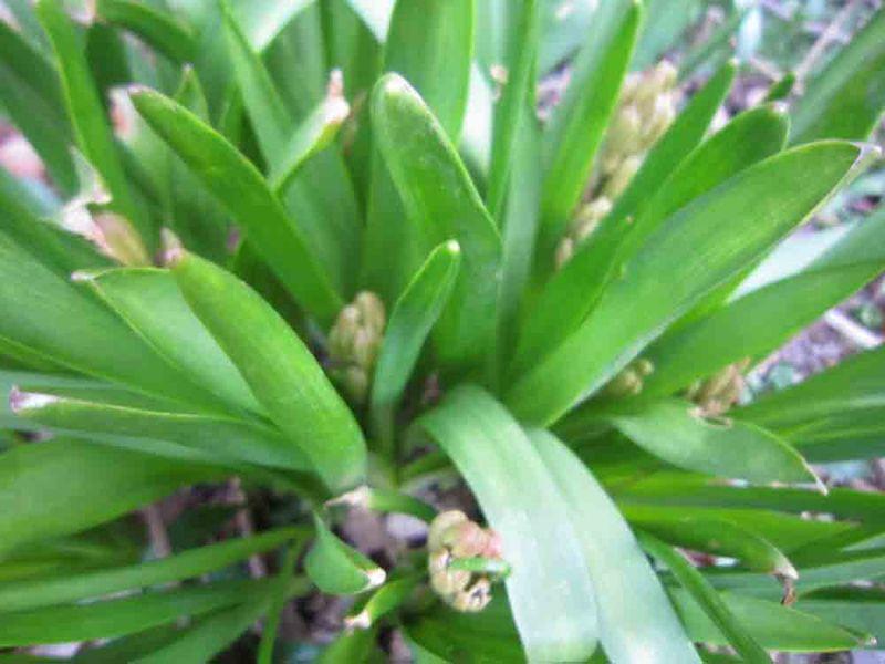 Hyacinths-for-web