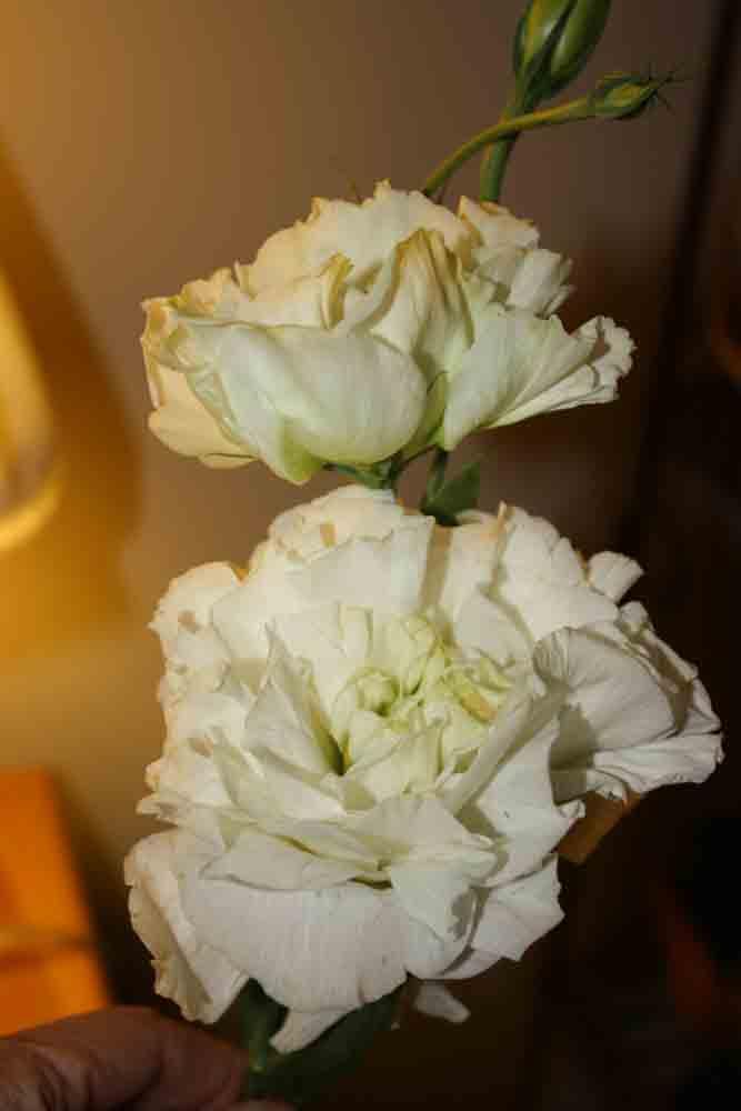 Fluffy-white-flowers-for-web