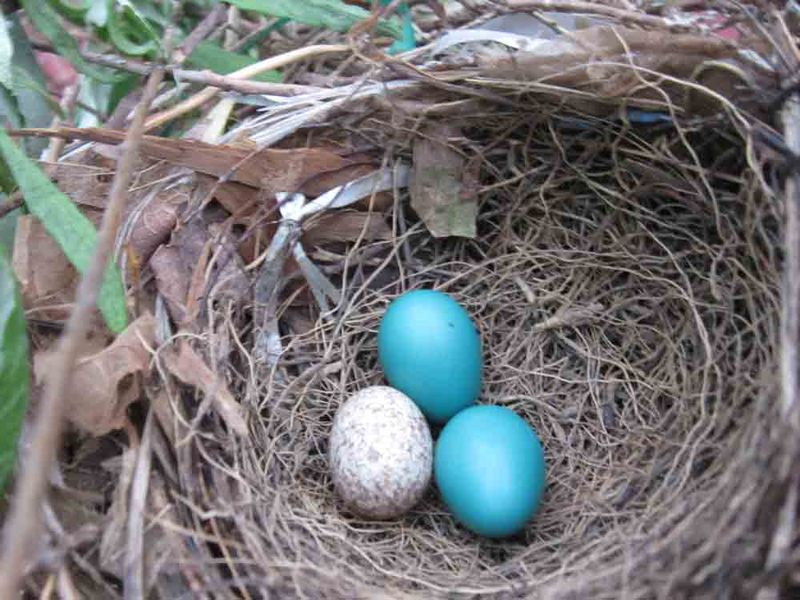 3-eggs-in-nest-for-web-2