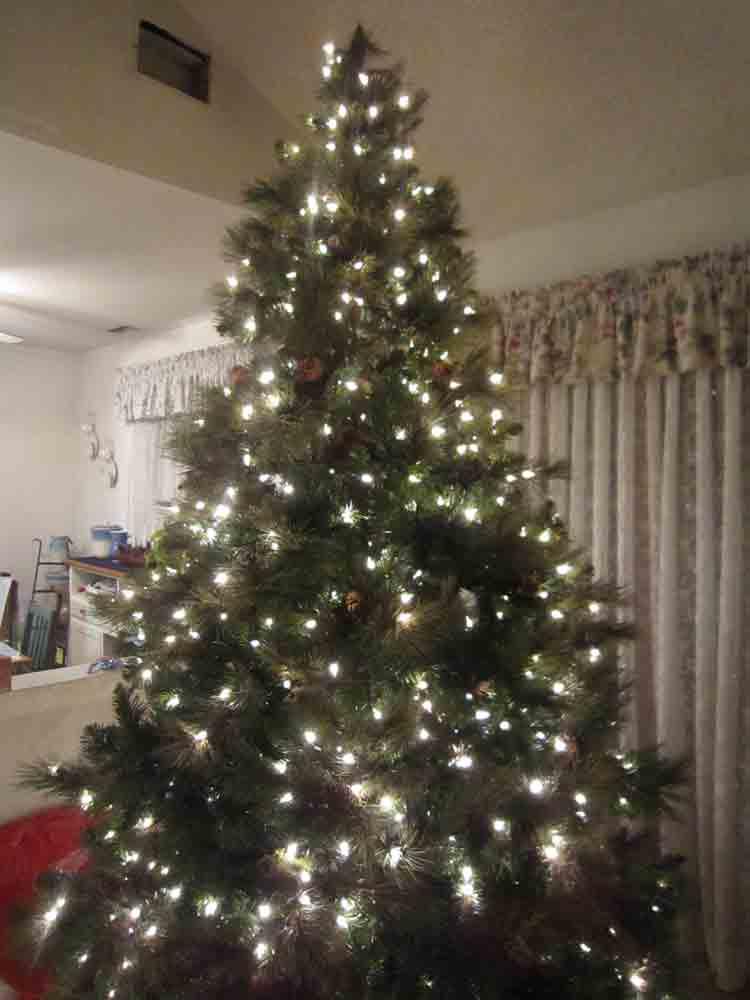 Last-tree-standing