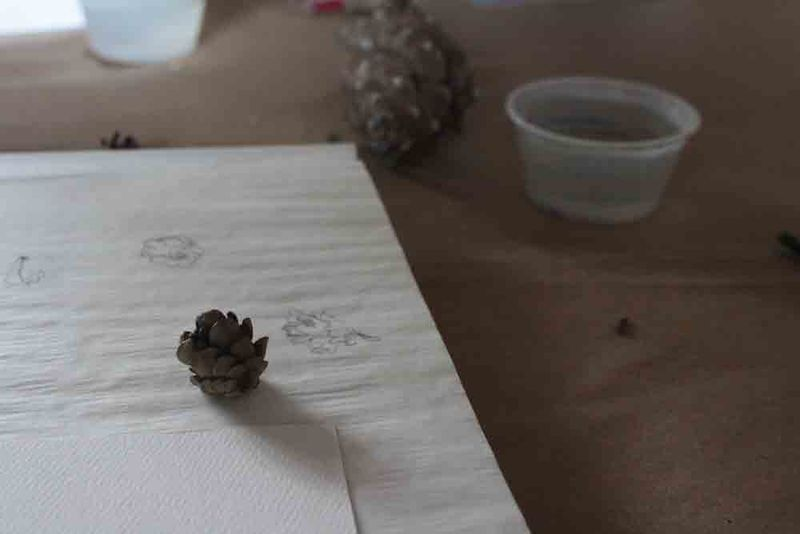 Pinecone-drawing-for-web