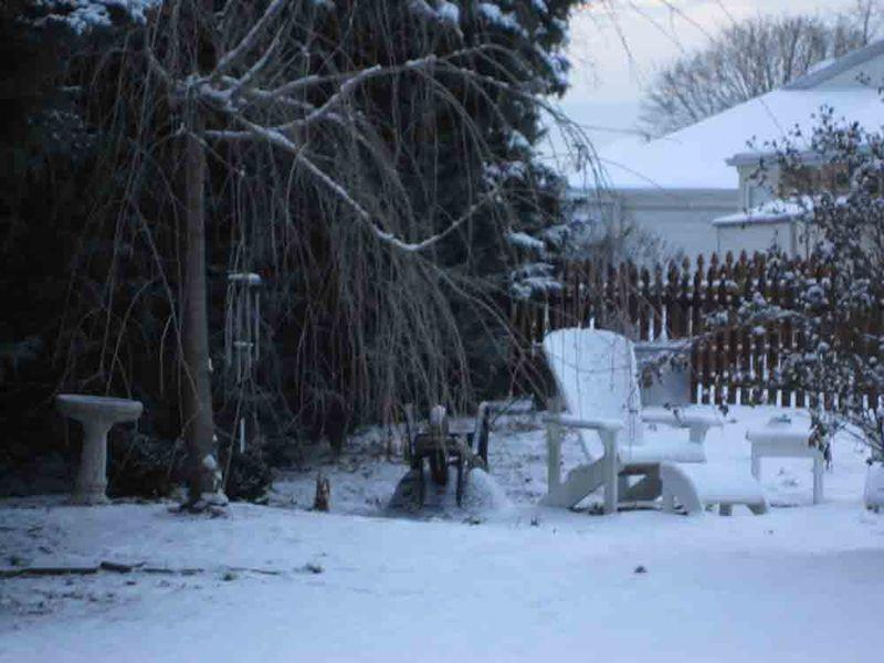 Backyard-snow-for-web