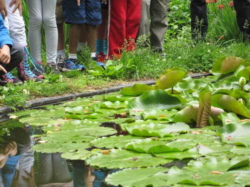 Kids-and-lily-pads-for-web