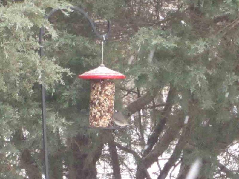 Bird-feeder-for-web
