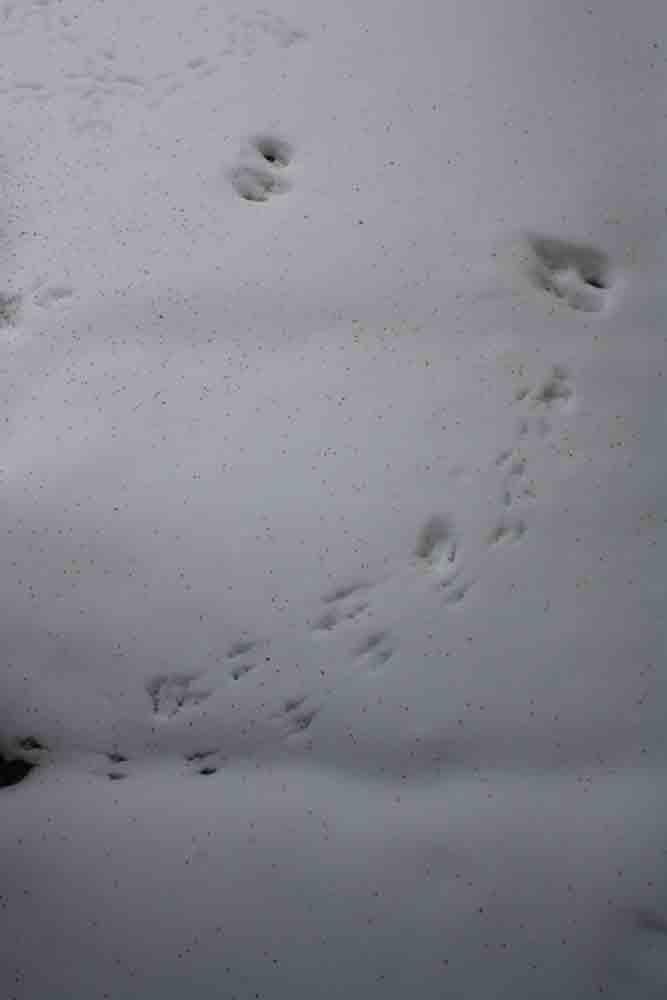 Critter-tracks-for-web