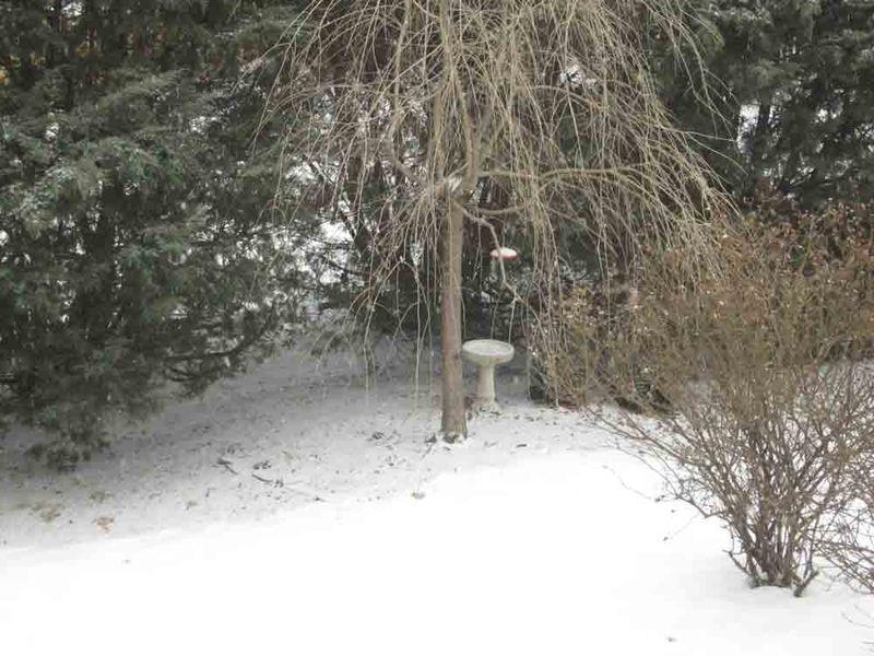 Snowy-sunday-for-web-3-1-15