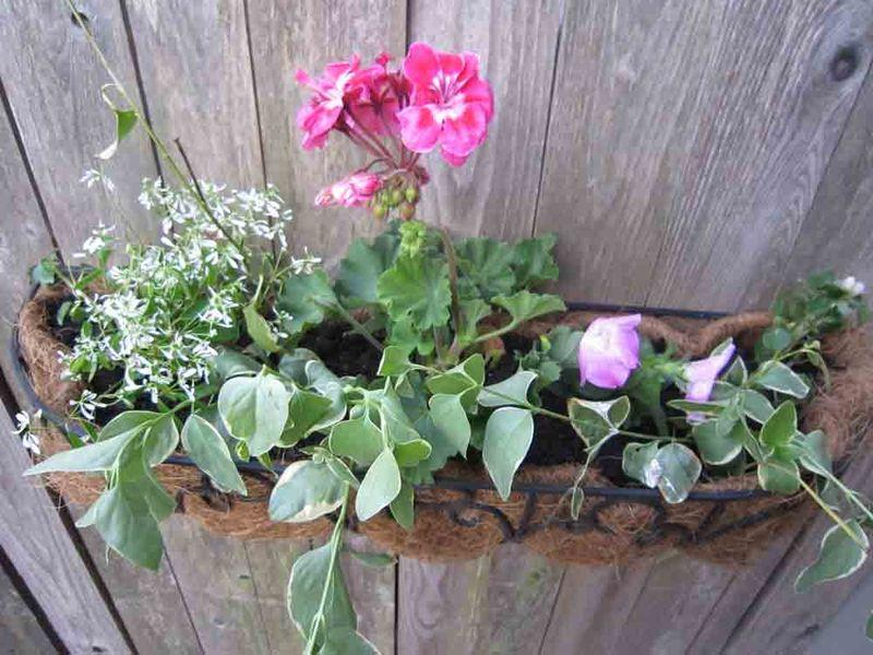 Basket-at-door-for-web