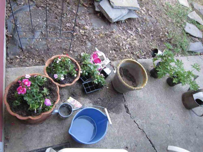 Planting-annuals
