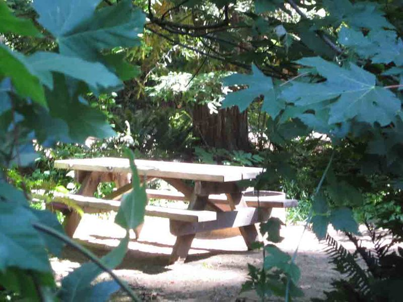 Redwood-campground-for-web
