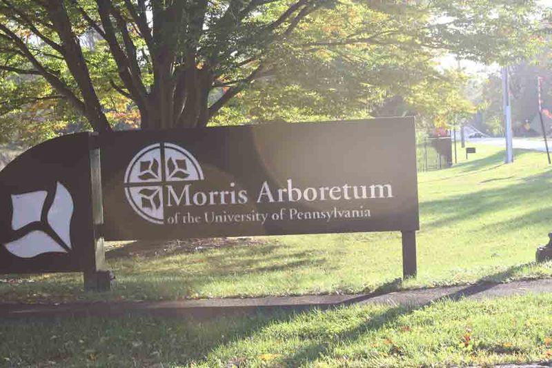 Morris-arboretum