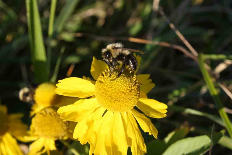 Bee-for-web
