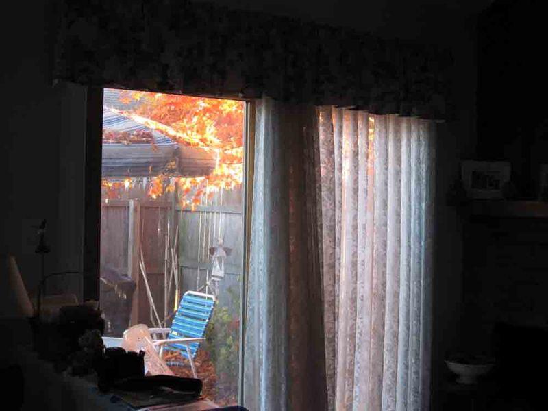 Outside-my-window-for-web