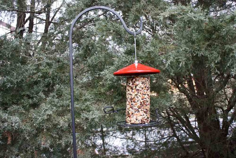 New-bird-feeder-for-web