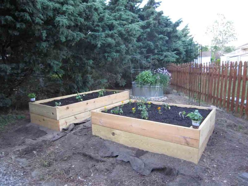 Raised-beds-planted-for-web