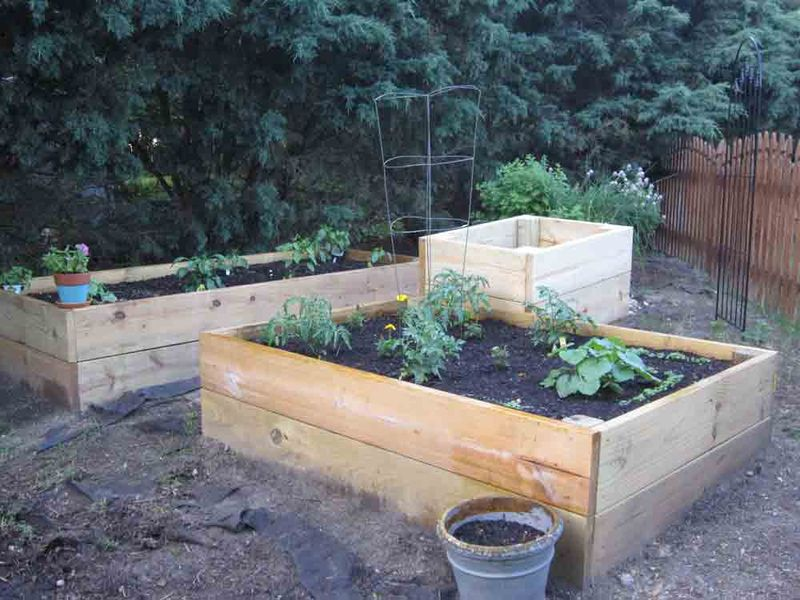 Raised-beds-for-web